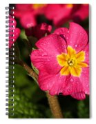 Primulas Spiral Notebook