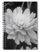 Prissy In Black And White Spiral Notebook