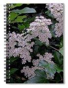 Privet Blossoms 2 Spiral Notebook