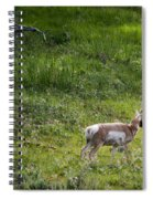 Pronghorn Antelope Among Wildflowers Spiral Notebook