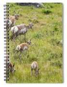 Pronghorn Antelope In Lamar Valley Spiral Notebook