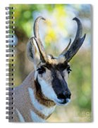 Pronghorn Antelope Portrait Spiral Notebook