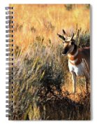 Pronghorn Buck Spiral Notebook