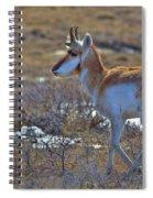 Pronghorn Buck Spiral Notebook