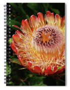 Protea Flower 2 Spiral Notebook