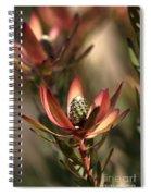 Protea  Spiral Notebook