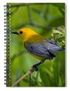 Prothonotary Warble Dsb071 Spiral Notebook