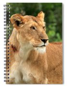 Proud Lioness Spiral Notebook