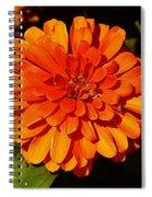 Proven Winners Flower Spiral Notebook