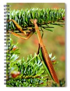 Prying Mantis On The Pine Tree Spiral Notebook