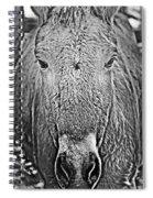 Przewalski's Horse Spiral Notebook