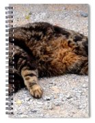 Psycho The Cat Spiral Notebook