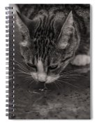 Puddle Drinking Kitty Spiral Notebook
