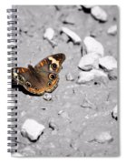 Puddling Butterfly 8766 Spiral Notebook