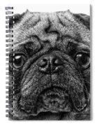 Pug Dog Black And White Spiral Notebook