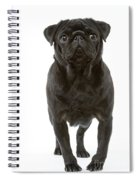 Pug Dog Spiral Notebook