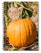 Pumpkin Growing In Pumpkin Field Spiral Notebook