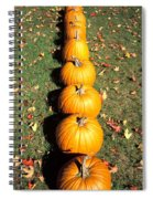 Pumpkins In A Row Spiral Notebook