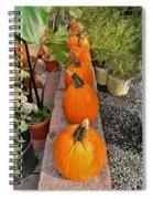 Pumpkins In A Row Spiral Notebook