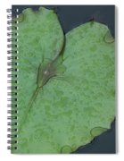 Puple Lily And Pad With Raindrops Spiral Notebook