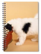 Puppy Dog With Head In Red Shoe Spiral Notebook