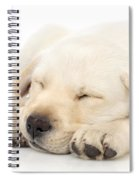 Puppy Sleeping On Paws Spiral Notebook