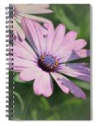 Purple African Daisy Spiral Notebook