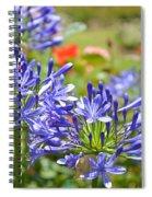 Purple Agapanthas Spiral Notebook