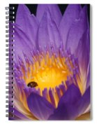 Purple And Bright Yellow Center Waterlily... Spiral Notebook