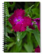 Purple And Red Spiral Notebook