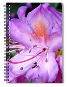 Purple Azalea Spiral Notebook
