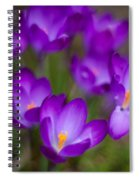 Purple Blanket Spiral Notebook