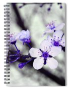 Purple Blossoms Spiral Notebook