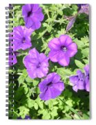 Petunias Purple Club Spiral Notebook