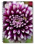 Purple Dahlia White Tips Spiral Notebook