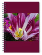 Purple Dual Coloured Tulip Spiral Notebook