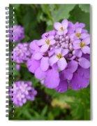 Purple Eye Candy That Pops Spiral Notebook