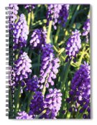 Purple Grape Hyacinth  Spiral Notebook