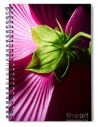 Purple Hibiscus Shot From Behind. Spiral Notebook