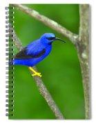 Purple Honeycreeper Spiral Notebook