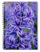 Purple Hyacinth Spiral Notebook