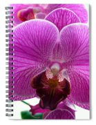 Purple Infusion Spiral Notebook