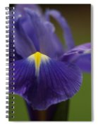 Purple Iris 6 Spiral Notebook