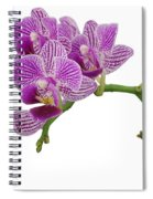 Purple Orchid-3 Spiral Notebook