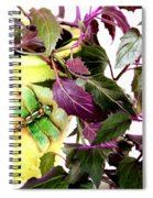 Purple Passion And Dragonfly Pot Spiral Notebook