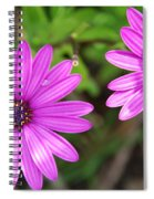 Purple Passion Spiral Notebook
