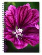 Purple Hollyhock Spiral Notebook