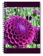 Purple Perfection Dahlia Flower Spiral Notebook
