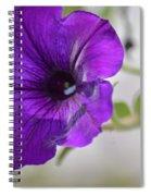 Purple Petunia 2013 Spiral Notebook