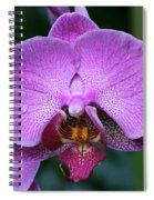Purple Phalaenopsis Orchids Spiral Notebook